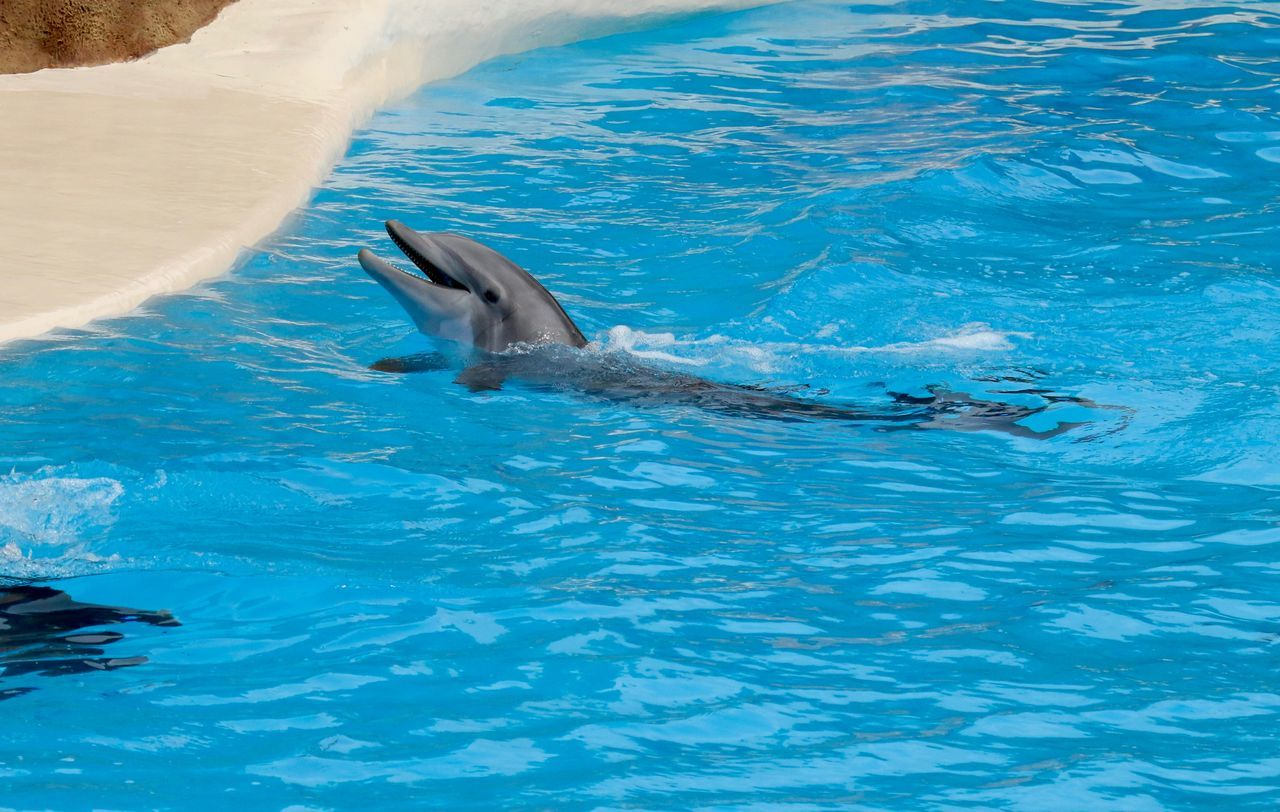 Animal Themes Animals In The Wild Blue Delfin Delfine Delphin Dolphin Dolphin Watching  Dolphinarium Dolphins DolphinShow Motion One Animal Rippled Sea Swimming Swimming Pool Water Waterfront