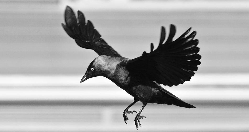 Beautiful stock photos of vogel, Animal Themes, Animal Wildlife, Animals In The Wild, Beak