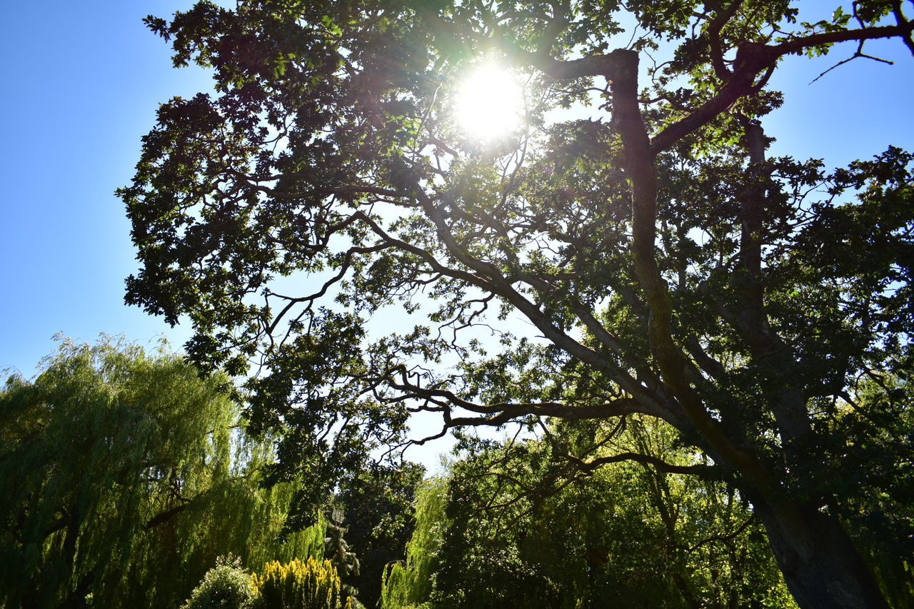tree, low angle view, nature, sunbeam, sunlight, day, forest, sunny, growth, sun, outdoors, beauty in nature, no people, branch, blue sky, hope, sky