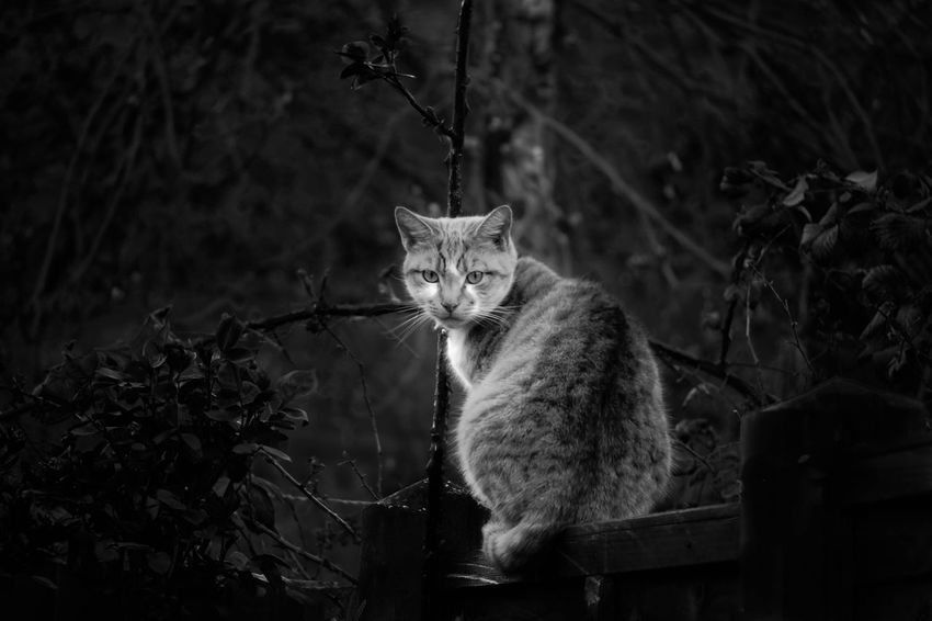   intruder   Animallovers Garden Bnw_captures Bnw Bnw_collection Bnwmood Bnwphotography Cat Lovers Everything And Anything Check This Out Everyday Life No People Outdoors
