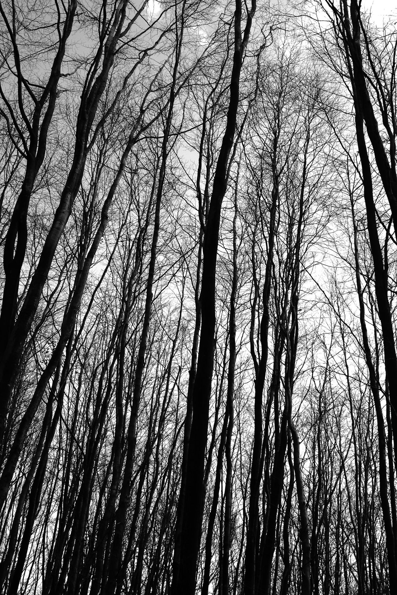 Forrest Forrest Photography Forrest Nature Trees Taking Photos Relaxing Canon 40D Blackandwhite Taking Pictures Landscape_Collection Landscapes Landscape_photography