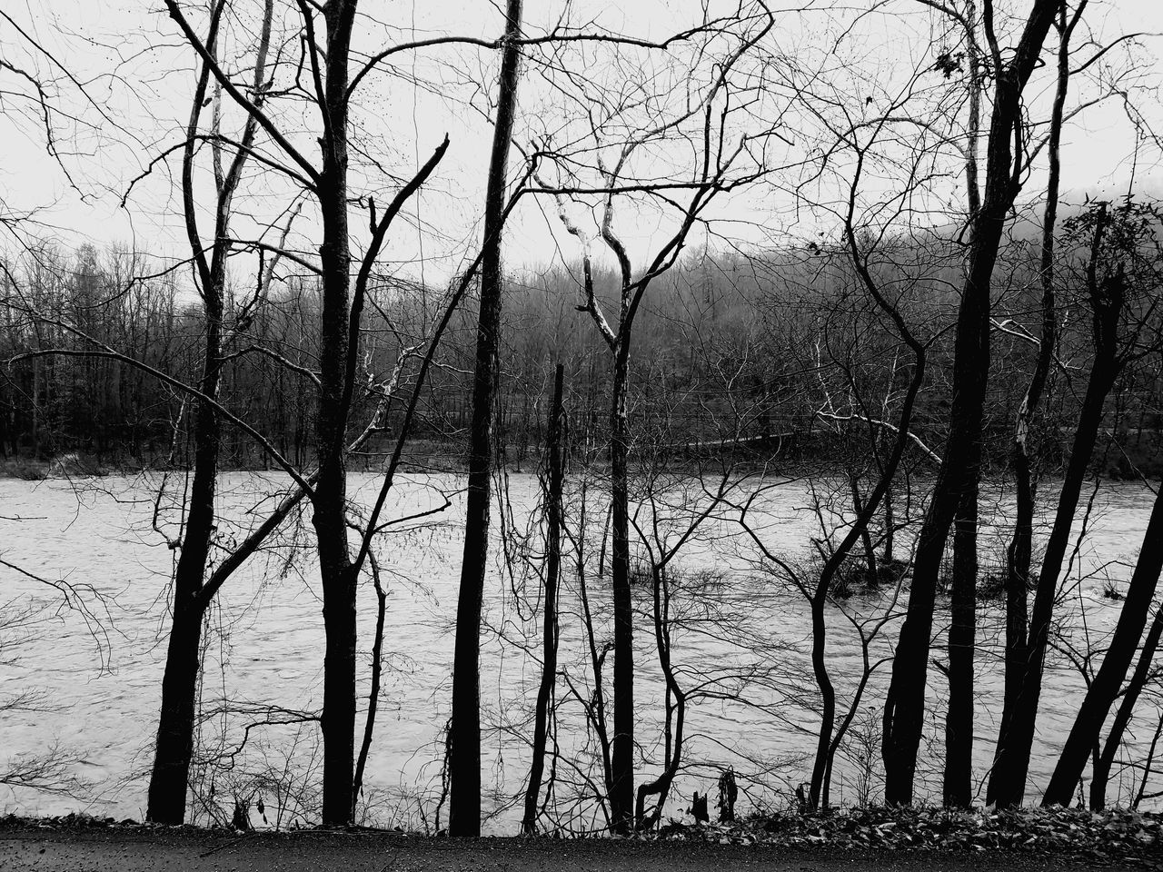 Tree Water No People Nature Wet Sky Bare Tree Outdoors Day Beauty In Nature Close-up Blackandwhite Riverside