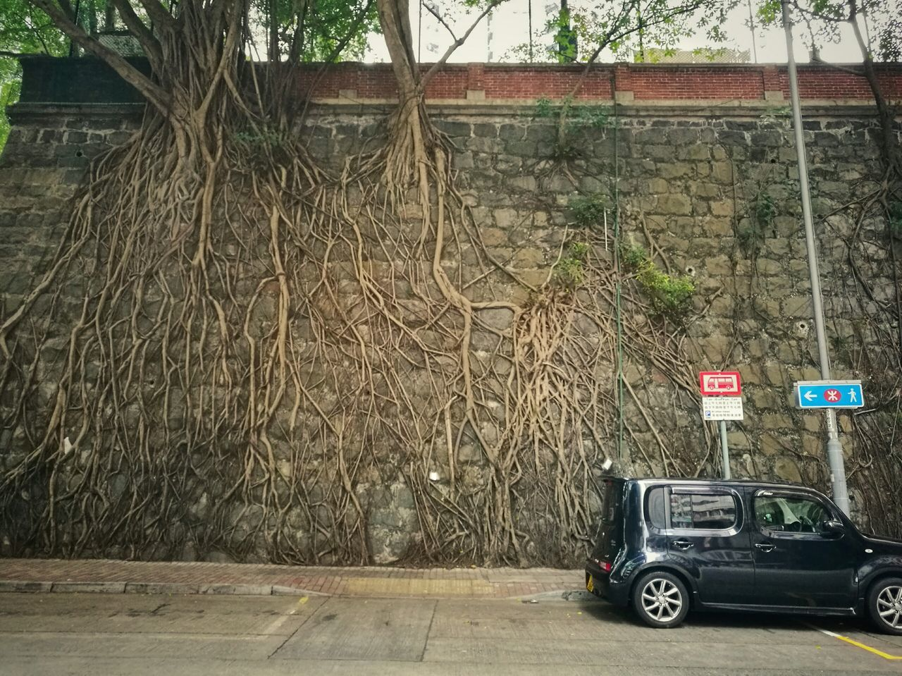 Transportation No People Tree Roots Roots Of Tree Nature And City Nature Hong Kong Huawei P9 Leica Outdoors Walking Around Tree Wall Taken By Me Streetphotography Brown