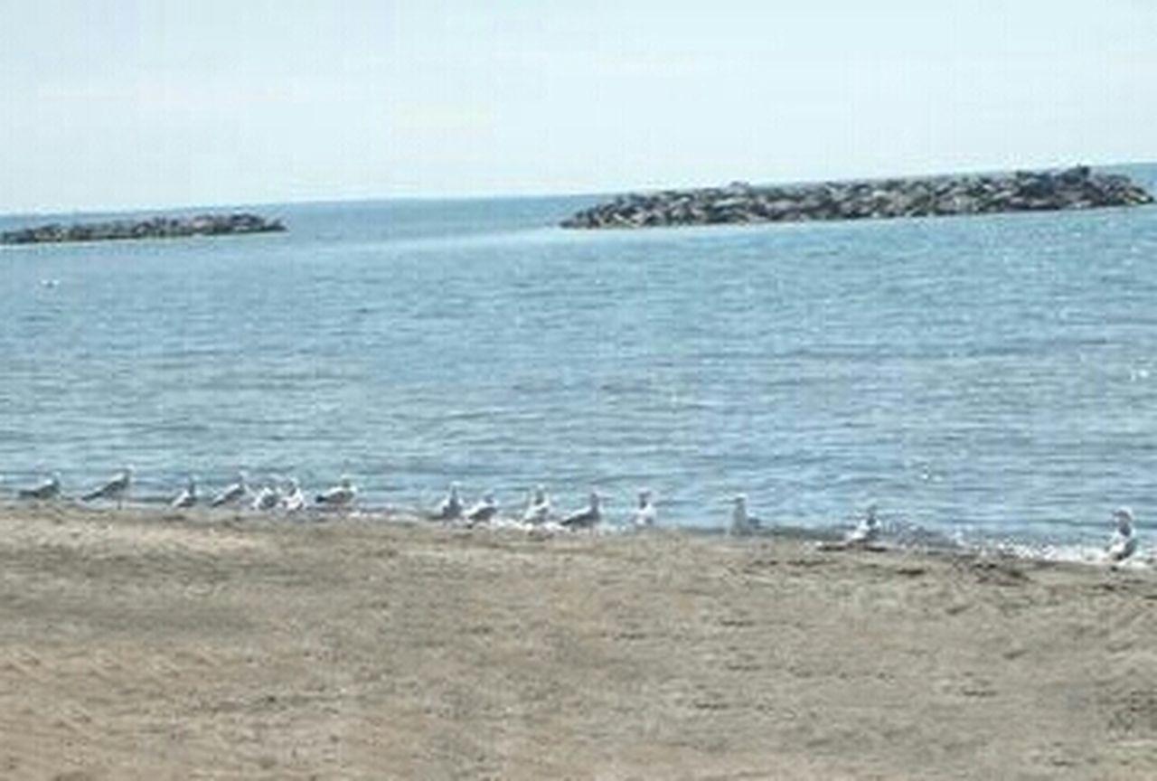 Seagulls Seagulls, Beach Lake Erie Photography Themes Eyeemphotography Beach EyeEm Gallery Angel Spoonie  EyeEmNewHere Outdoors Sky Horizon Over Water Water Day Bird Gang Seagulls At The Lake