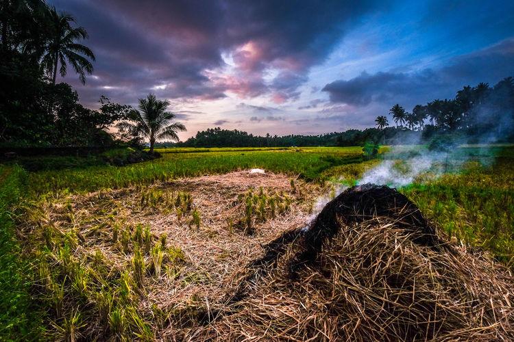 #clouds  #EyeEm #EyeemPhilippines #farm #fujifilm #fujifilmph #fujifilmxt10 #Nature  #naturephotography #Philippines #sky #sunset #sun #clouds #skylovers #sky #nature #beautifulinnature #naturalbeauty #photography #landscape