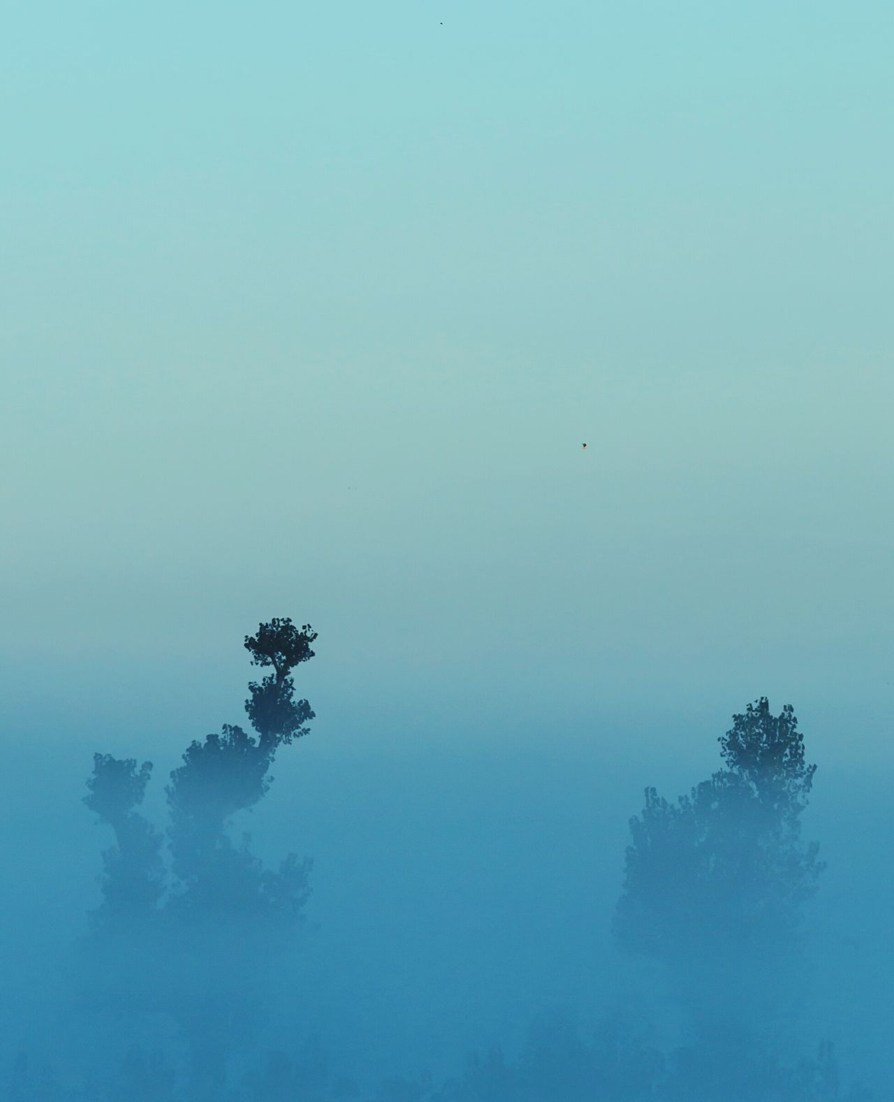 Tree No People Nature Sky Lake Bird Sunset Water Beauty In Nature Outdoors Day Foggy Morning Foggy Landscape