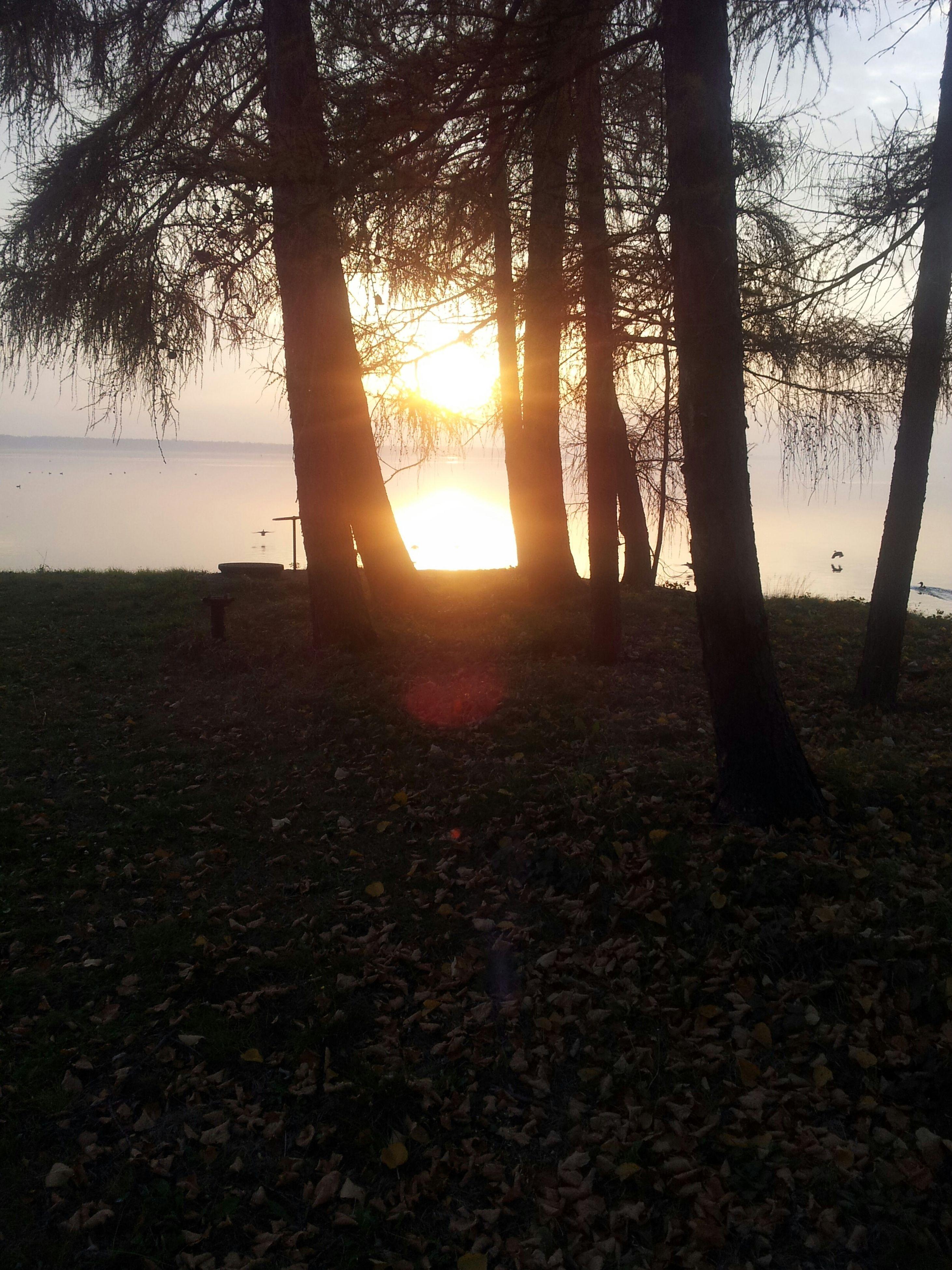 sunset, tree, sun, tranquility, tranquil scene, tree trunk, scenics, beauty in nature, sunlight, nature, silhouette, landscape, orange color, growth, idyllic, non-urban scene, field, sky, forest, sunbeam