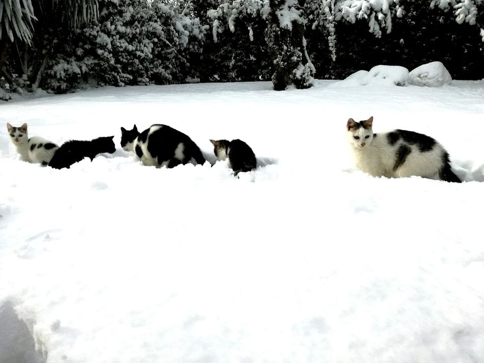 Snow Winter Cold Temperature Animal Themes Mammal Nature No People Outdoors Animal Wildlife Landscape Animals In The Wild Beauty In Nature Day cats mylif e