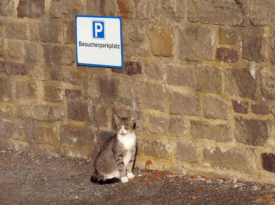 Fully socialized. / Voll sozialisiert.. ;-) Animal Animal Themes Cat Day Domestic Animals Domestic Cat Fun Humor Katze Looking At Camera Mammal No People One Animal Outdoors Parken Parking Parkplatz Pets Sitting Sozialisiert Spaß