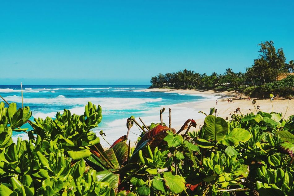 Sea Beach Palm Tree Blue Water Growth Nature Travel Destinations Plant Beauty In Nature No People Scenics Horizon Over Water Outdoors Day Cactus KalalauTrail JurrasicWorld Sunset Beach Oahu, Hawaii Ocean View Beauty In Nature Tropical Climate Kauai Hawaii Hawaii Life