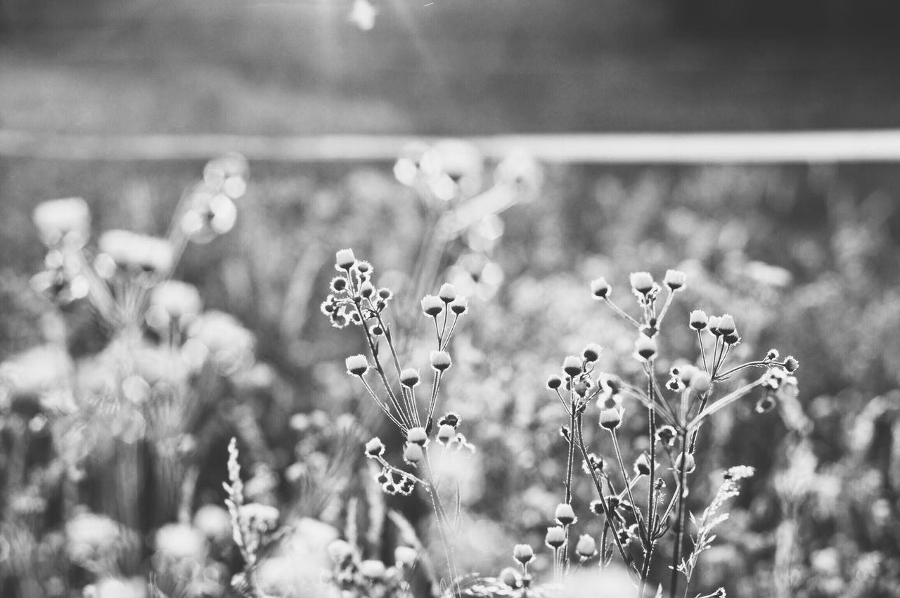 Flowers Blackandwhite Blackandwhite Photography Countryside Country Life Country Living Slow Living Flowers, Nature And Beauty Tranquility