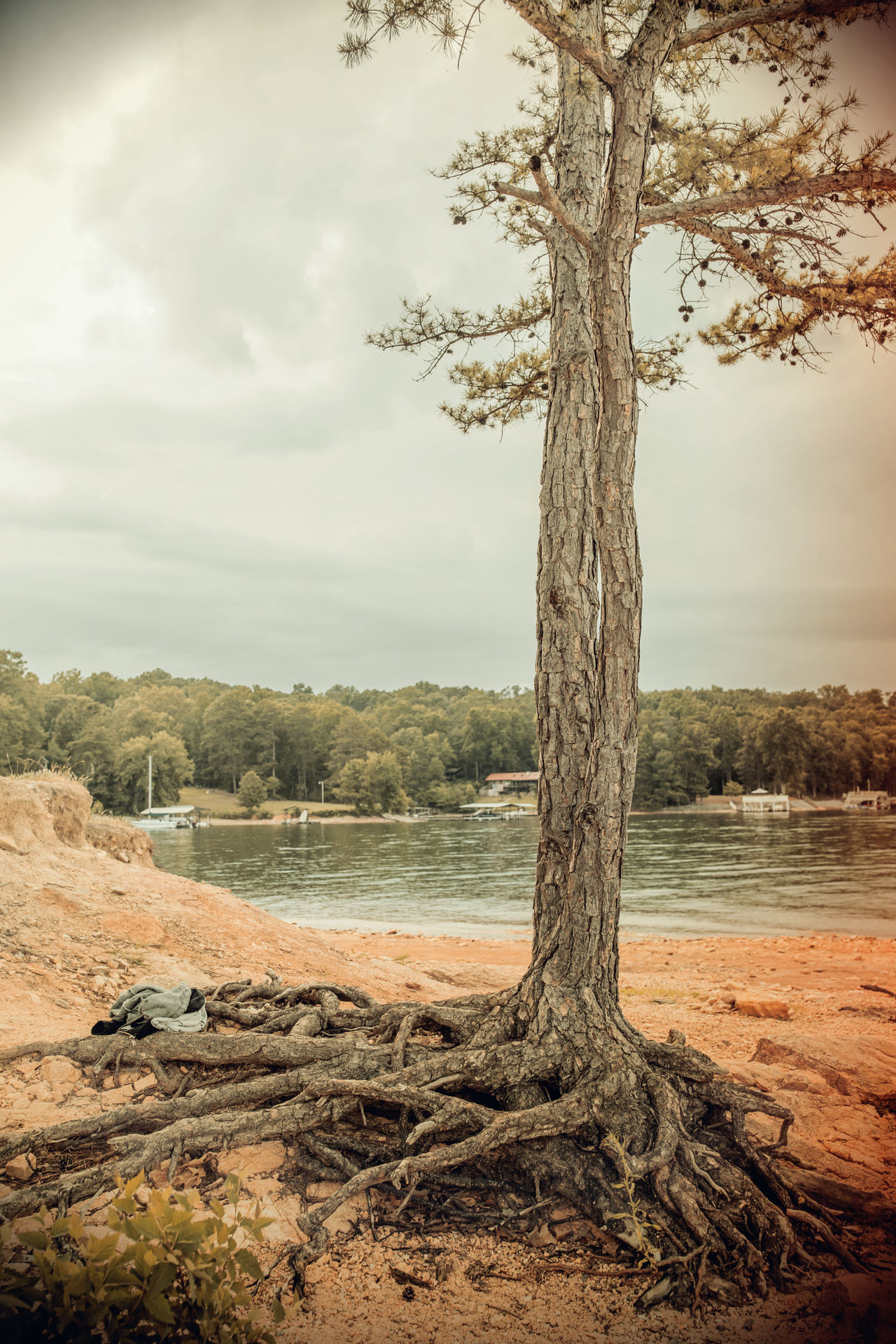 Beauty In Nature Branch Day Dead Tree Edit Landscape Nature No People Outdoors Scenics Sky Tranquility Tree Tree Trunk Vintage Vintage Photo Water