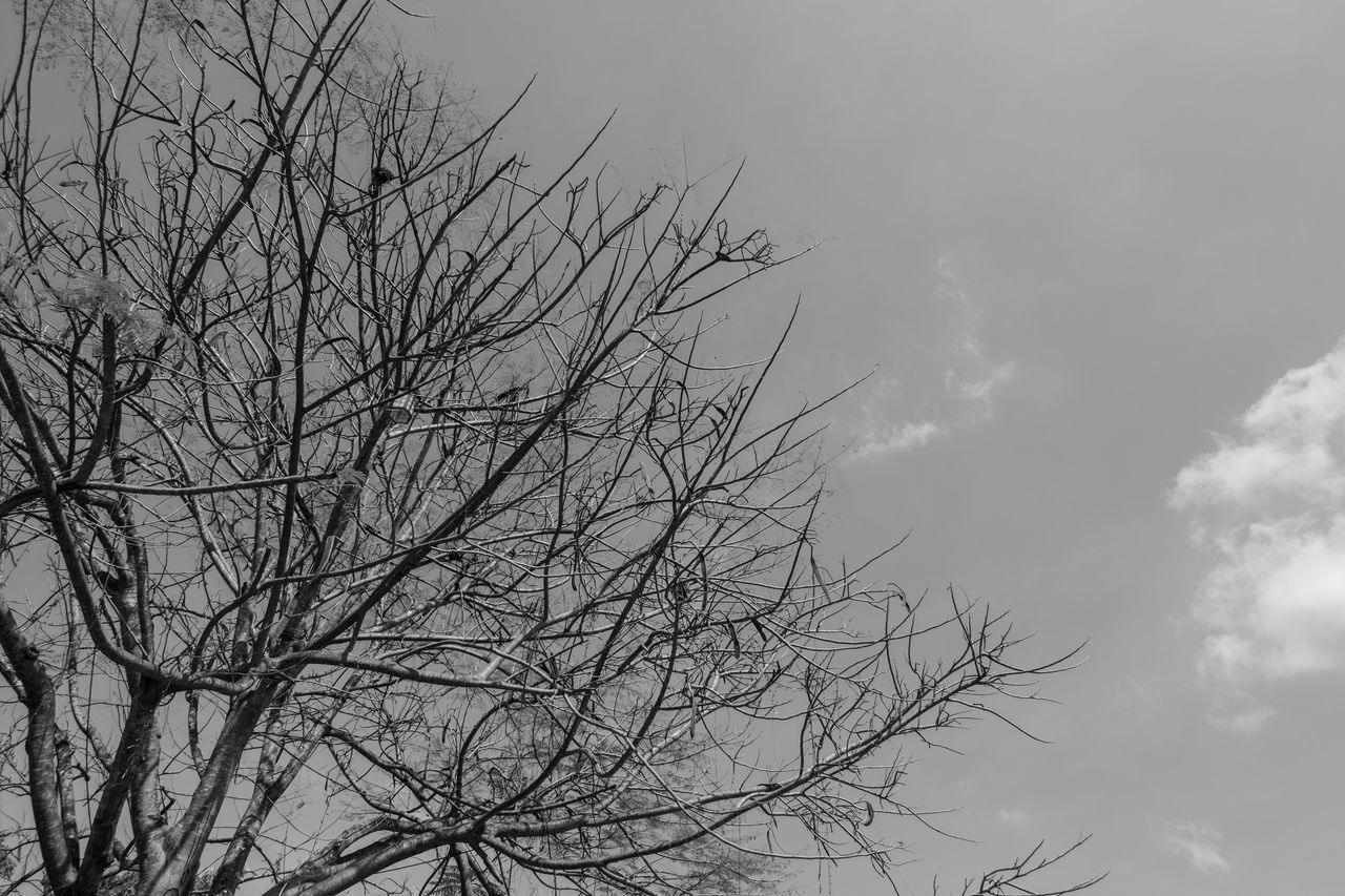 bare tree, low angle view, sky, nature, no people, tree, branch, outdoors, day, growth, beauty in nature