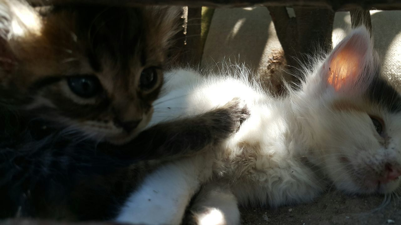 Close Up Of Two Kittens