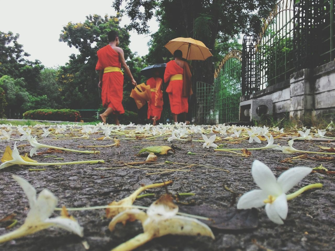 Surface Level View Of Fallen Flowers With Monks Walking On Footpath