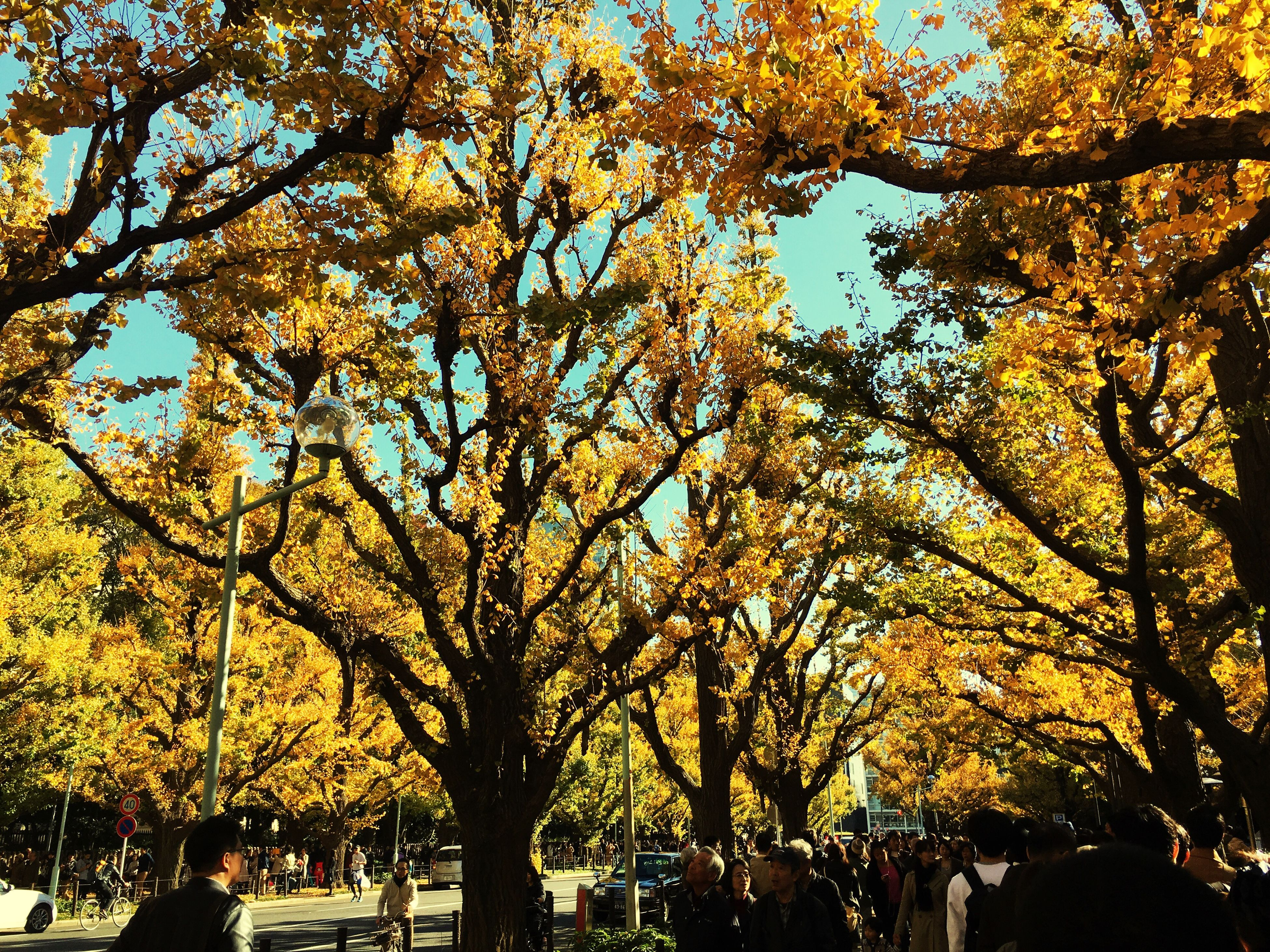 tree, yellow, growth, branch, autumn, low angle view, change, beauty in nature, nature, season, tranquility, park - man made space, clear sky, outdoors, sunlight, day, sky, scenics, leaf, flower