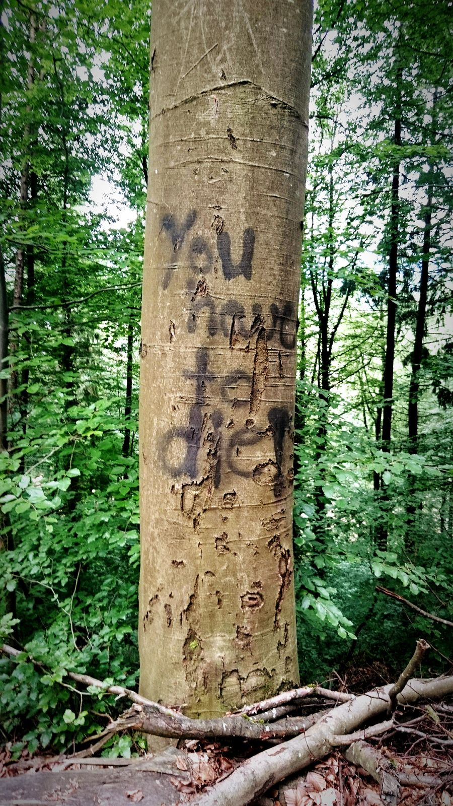 Tree Nature Forest No People Growth Green Color Outdoors Day Close-up Tree Trunk Umweltschutz Waldsterben Die You Have Green Eco Ecology