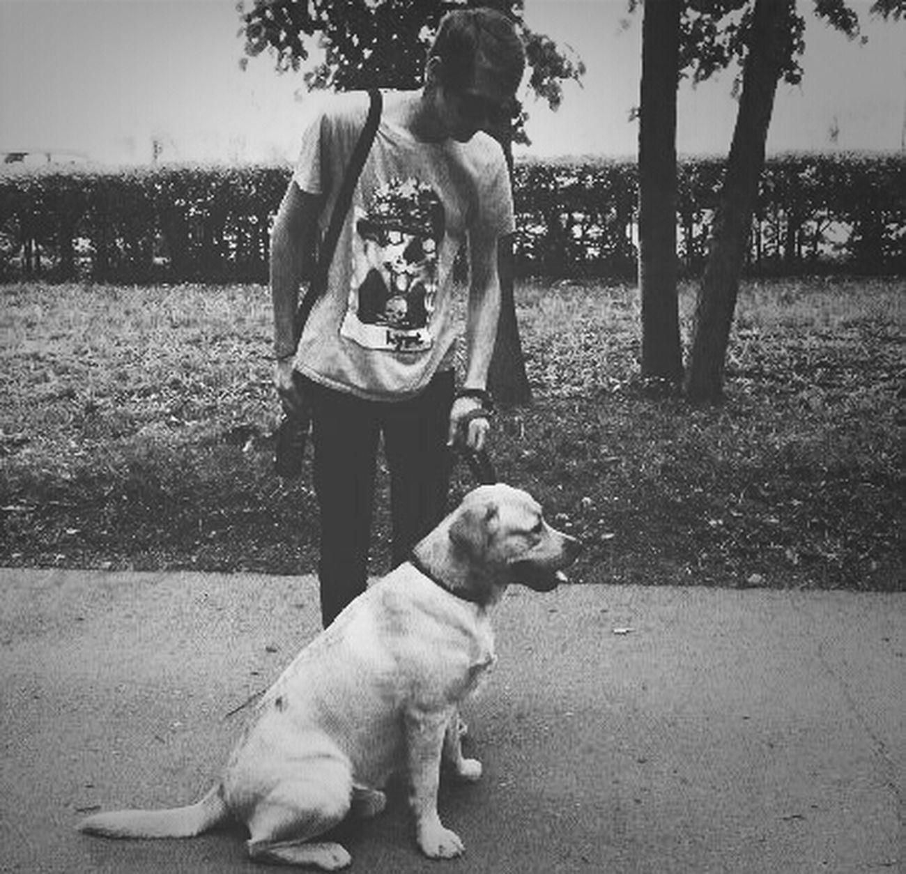 I'm I'm And Dog Dog