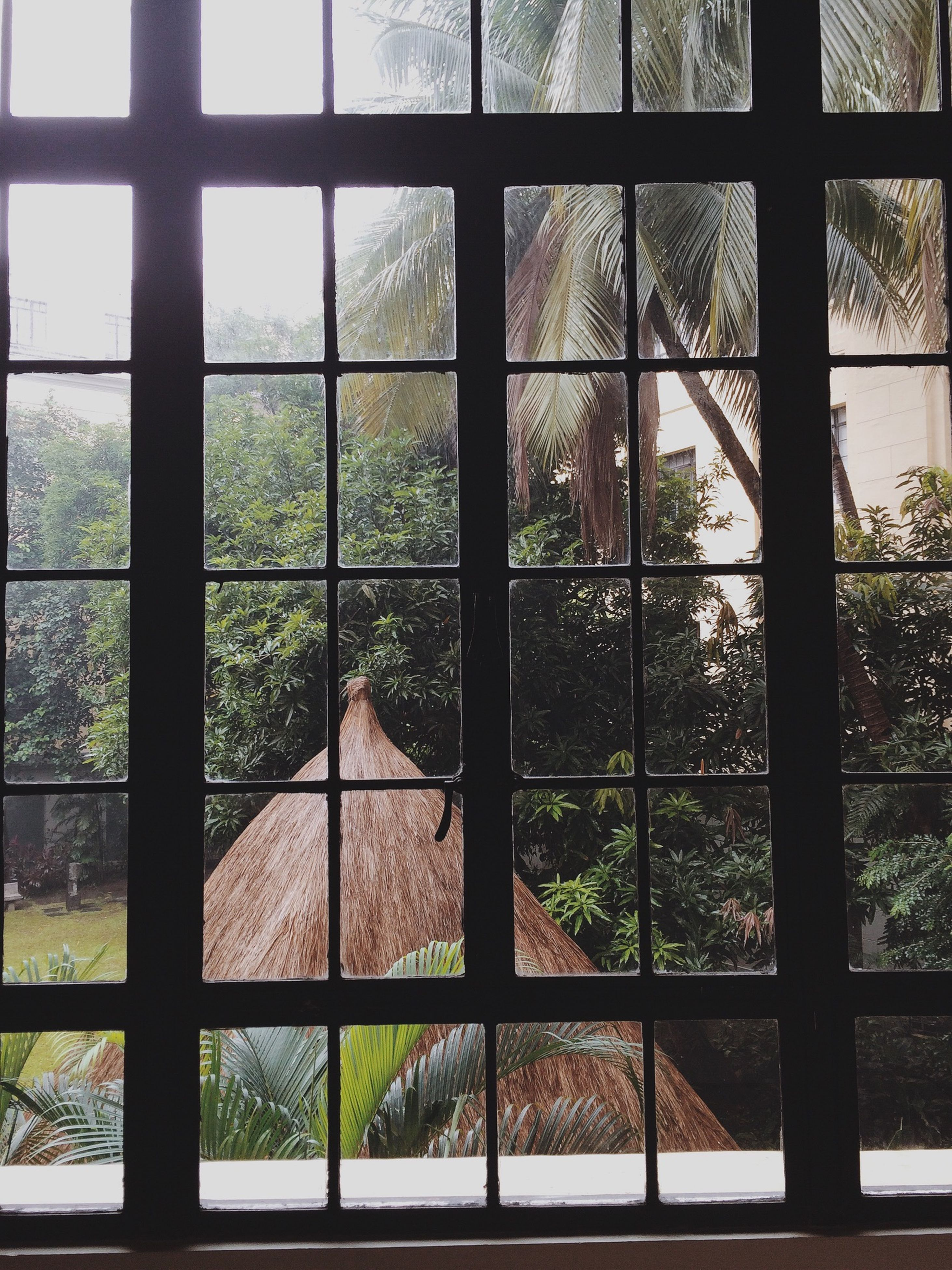 window, tree, fence, glass - material, architecture, indoors, transparent, built structure, metal, protection, building exterior, safety, day, house, pattern, no people, security, growth, field, sky