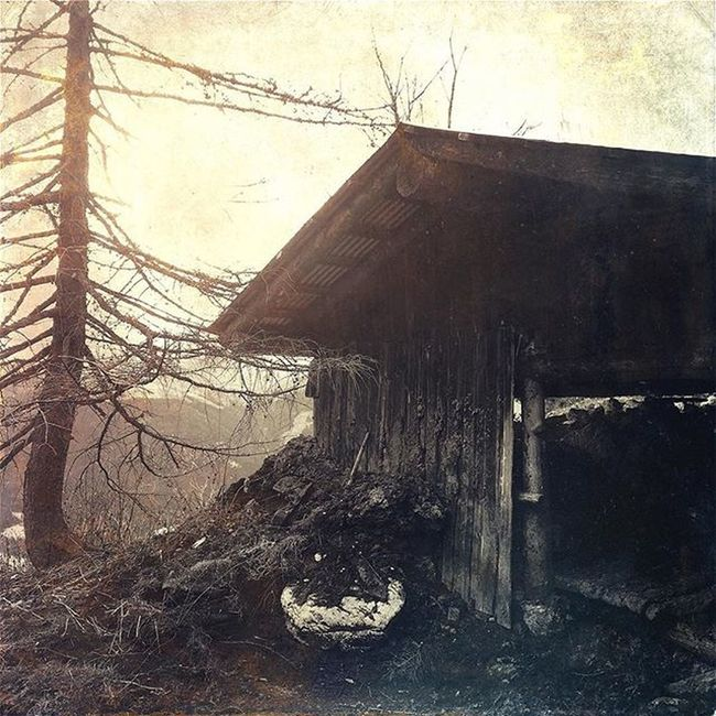 Alte Hütte unterm Kalkstein Old Barn Alte Hütte Kuh Kühe Stackablesapp Tree Baum Dreck Dirt Rust Mountain Clouds Sun Ambient