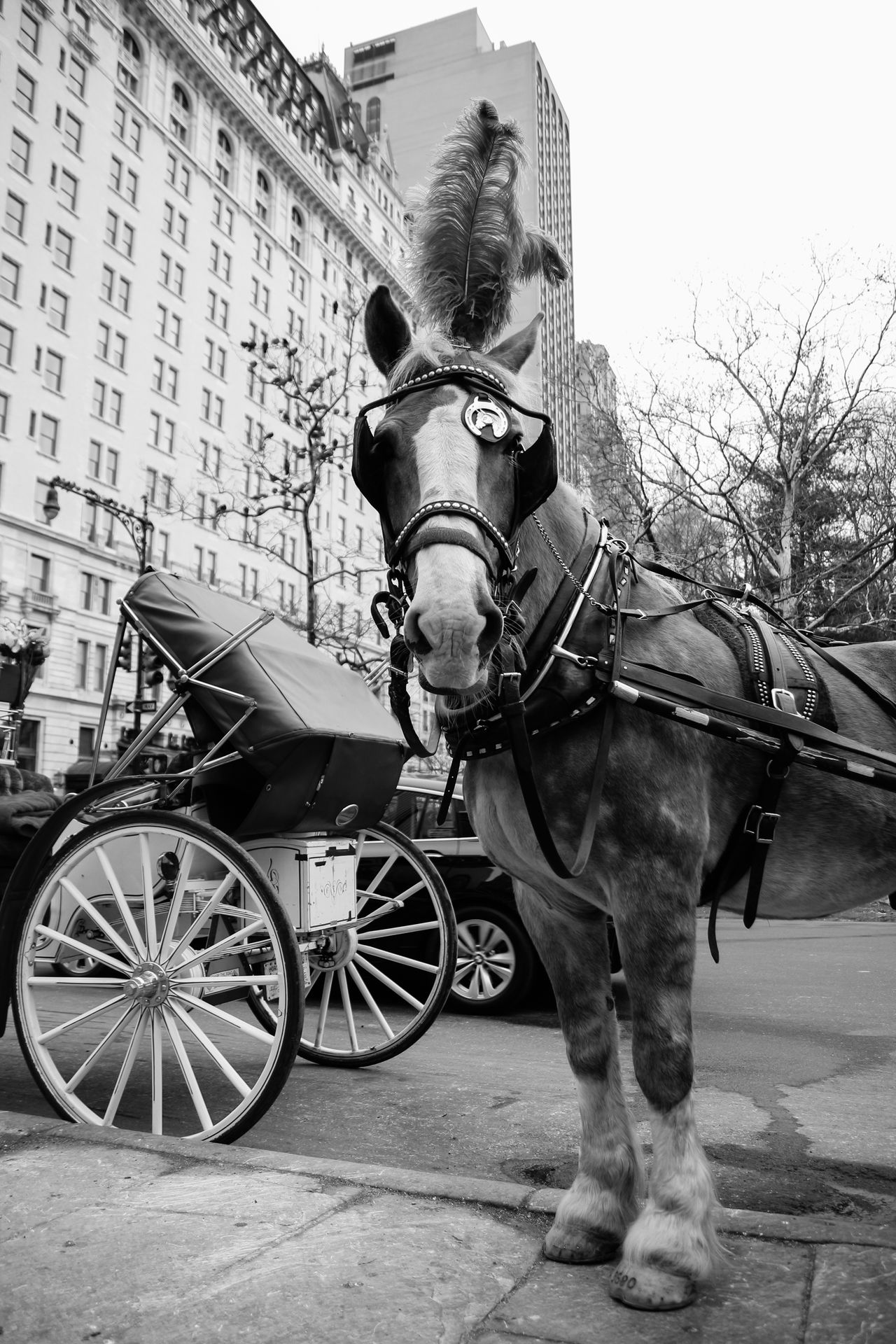 Animal Themes Carriage Central Park - NYC City Day Domestic Animals Horse Horse Cart Horsedrawn Mammal Mode Of Transport No People NYC One Animal Outdoors Street Transportation Working Animal
