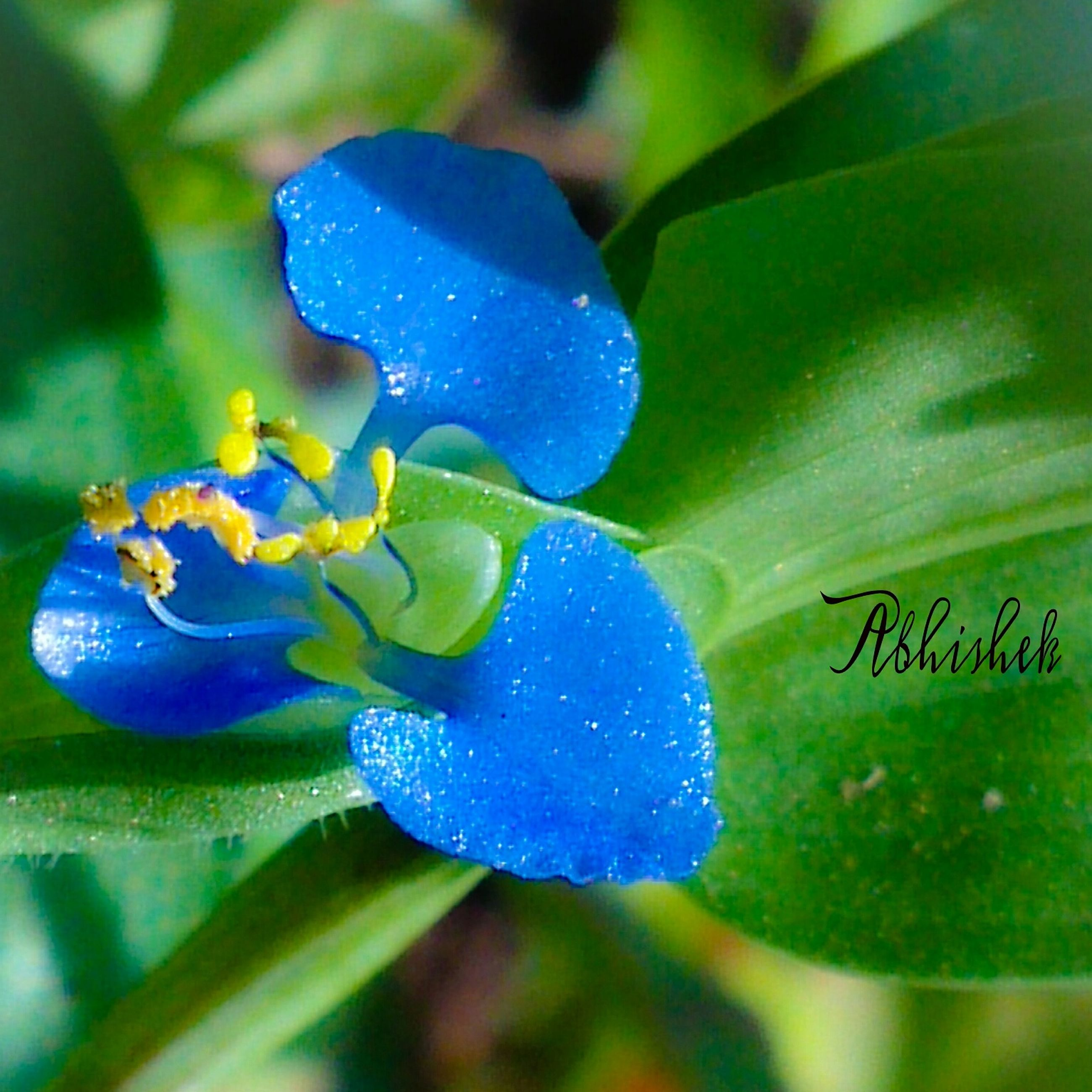 fragility, blue, flower, purple, close-up, freshness, petal, drop, beauty in nature, growth, water, flower head, focus on foreground, wet, nature, plant, green color, selective focus, no people, leaf