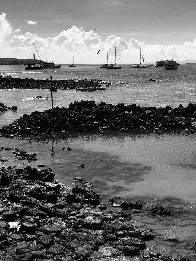 Sailboats Bird Sea Port Harbor Rocks Black And White Monochrome Water Seascape Clouds And Sky Sky Cloud - Sky Beach Nautical Vessel Transportation Outdoors Mode Of Transport Day Nature Beauty In Nature No People Scenics Horizon Over Water Windmill