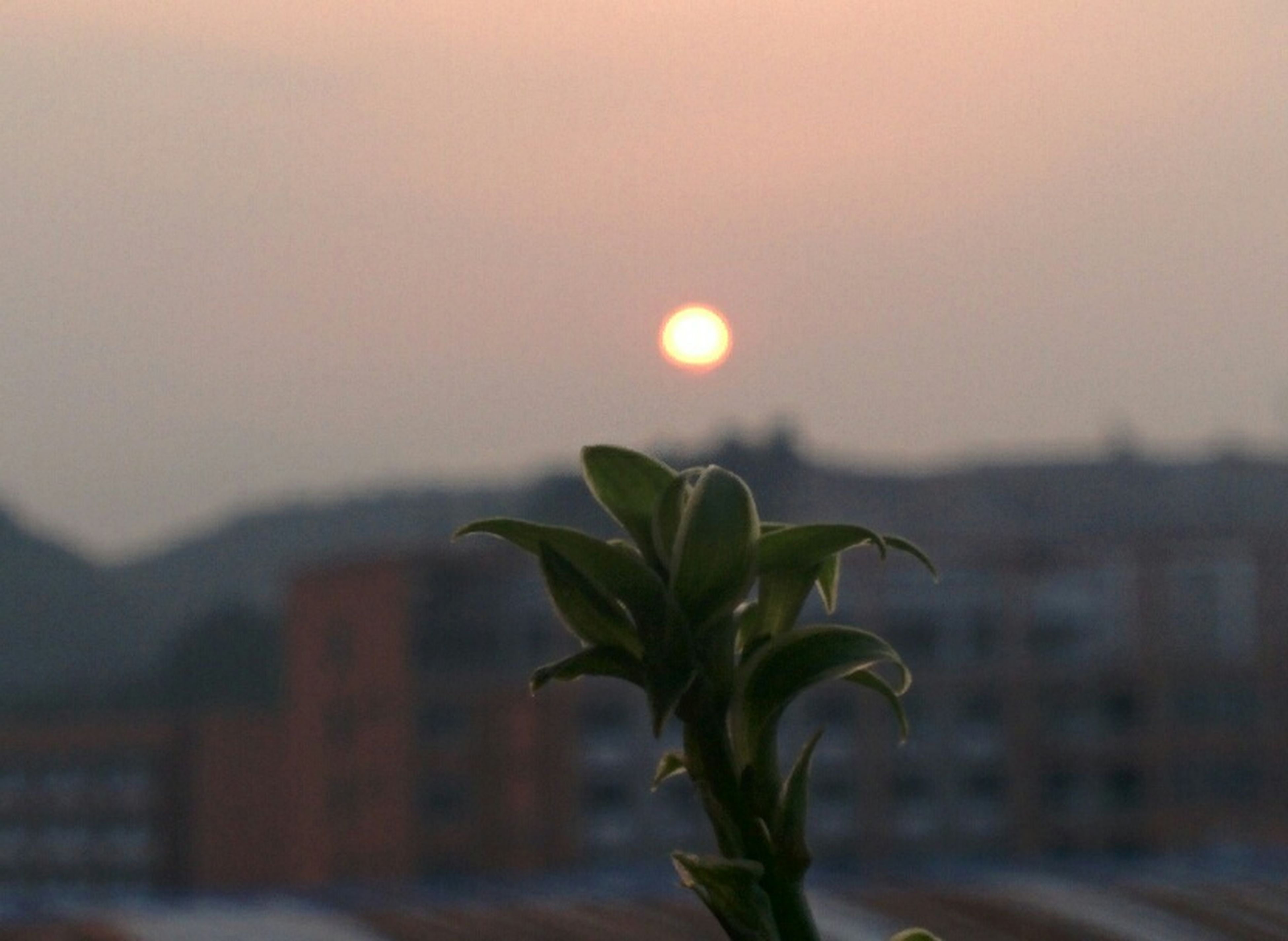sunset, plant, growth, leaf, focus on foreground, nature, sun, sky, beauty in nature, close-up, sunlight, tranquility, green color, clear sky, growing, no people, outdoors, selective focus, tranquil scene, built structure