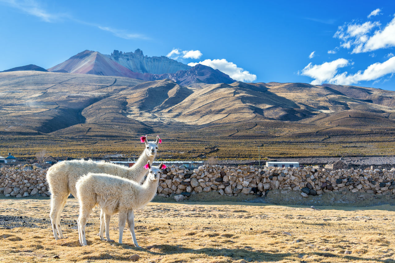 Beautiful stock photos of bauernhof, Animal Themes, Beauty In Nature, Bolivia, Cloud - Sky