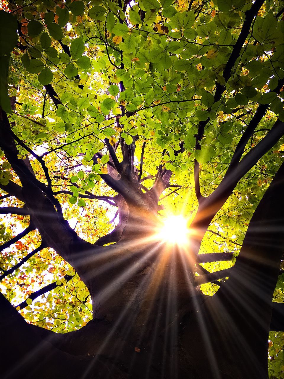 tree, nature, growth, sunlight, branch, beauty in nature, leaf, sun, day, outdoors, human hand, one person