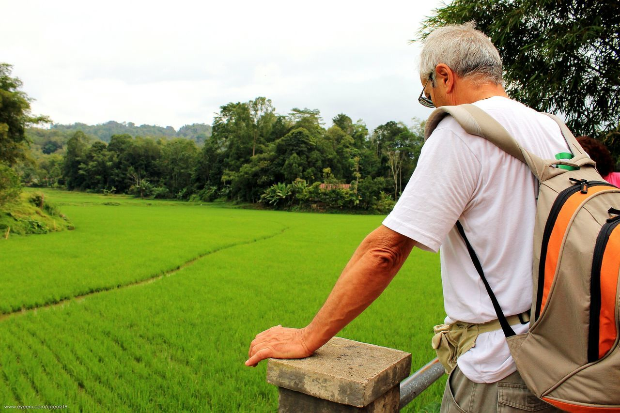One Person Only Men Senior Adult One Man Only Retirement One Senior Man Only Outdoors People Agriculture Green Green Color Kete Kesu Toraja Rantepao Toraja Utara Travel Destinations INDONESIA