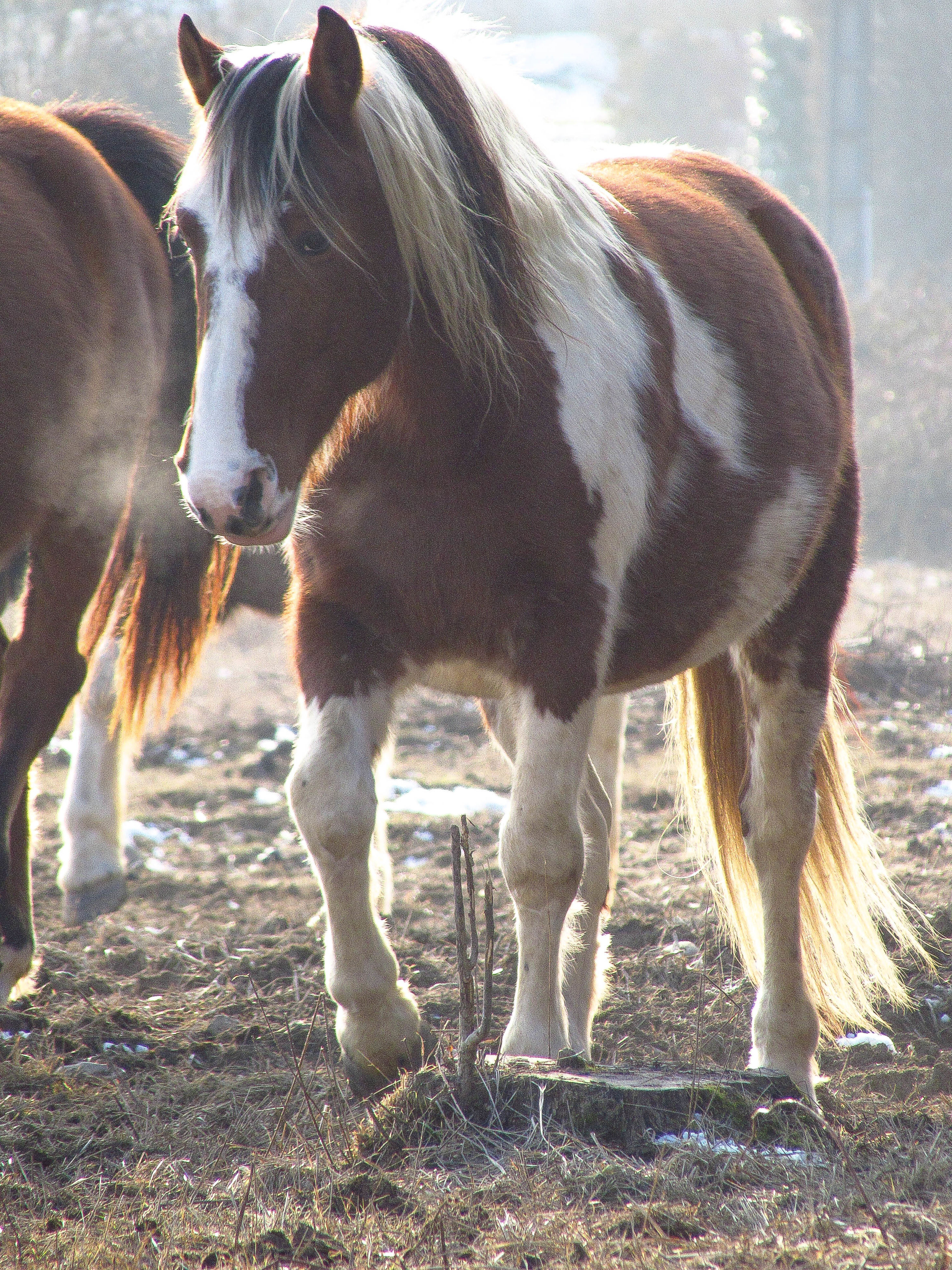 horse, animal themes, mammal, domestic animals, no people, tree, working animal, day, outdoors, close-up