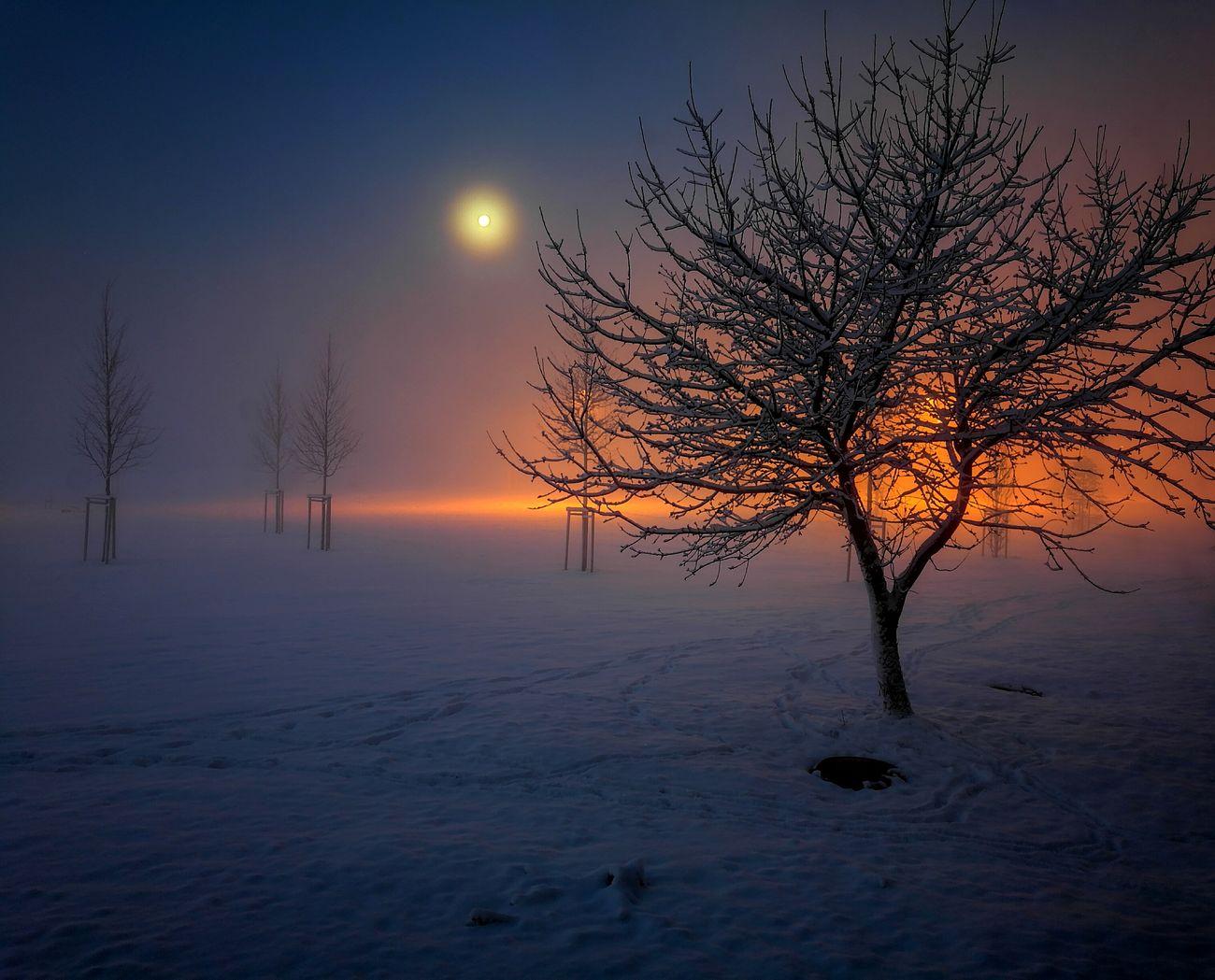 Tree Nature Landscape Moon Light Fog Snow ❄