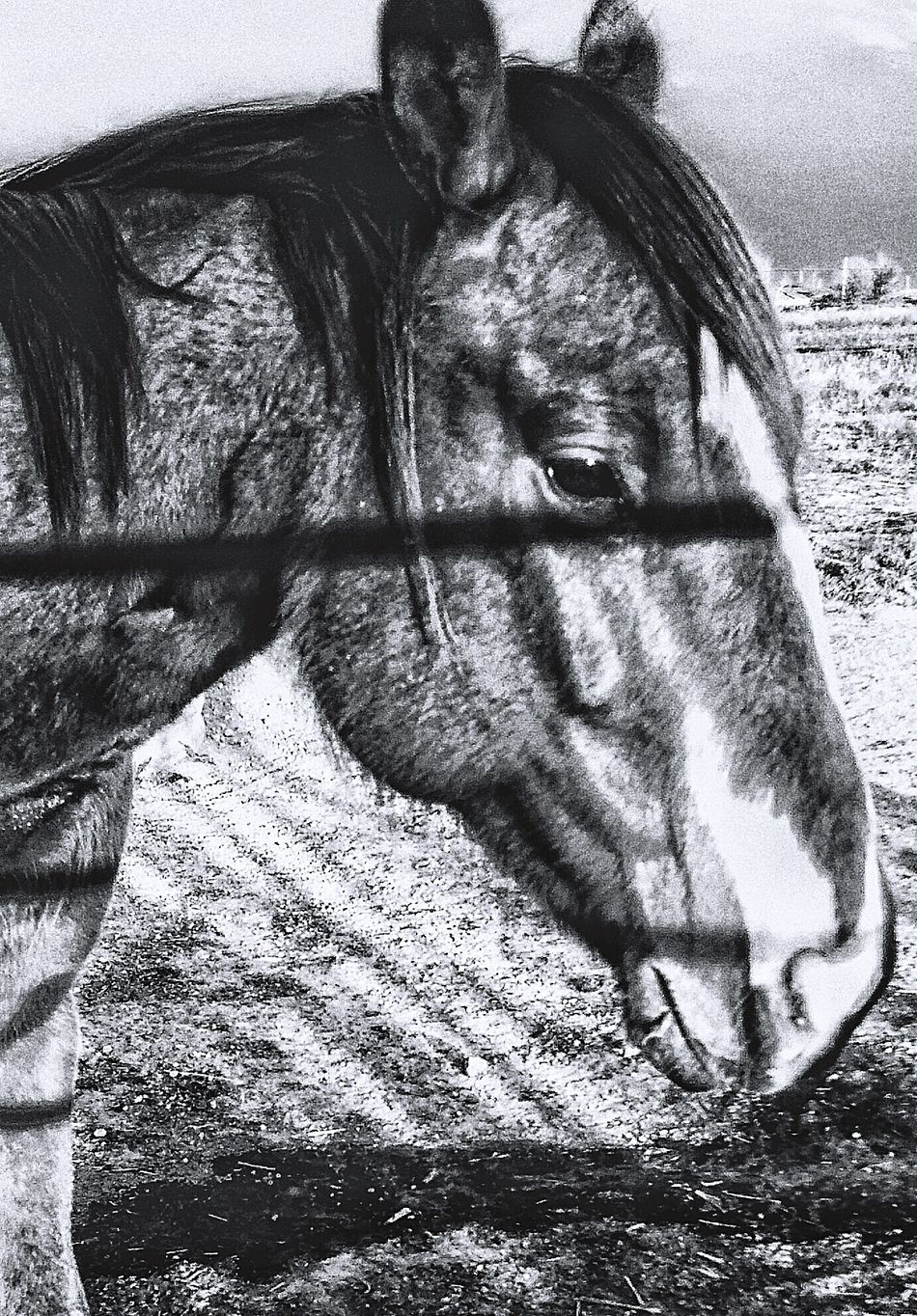Ranch horses Horse Pony Stud stallion Working Animal Livestock Ranch Farm Country Cowboy Lifestyle Animal Theme Mammal Equine western Outdoors Barn Pasture Stable Corral Hoof Livestock Profile Rural_living