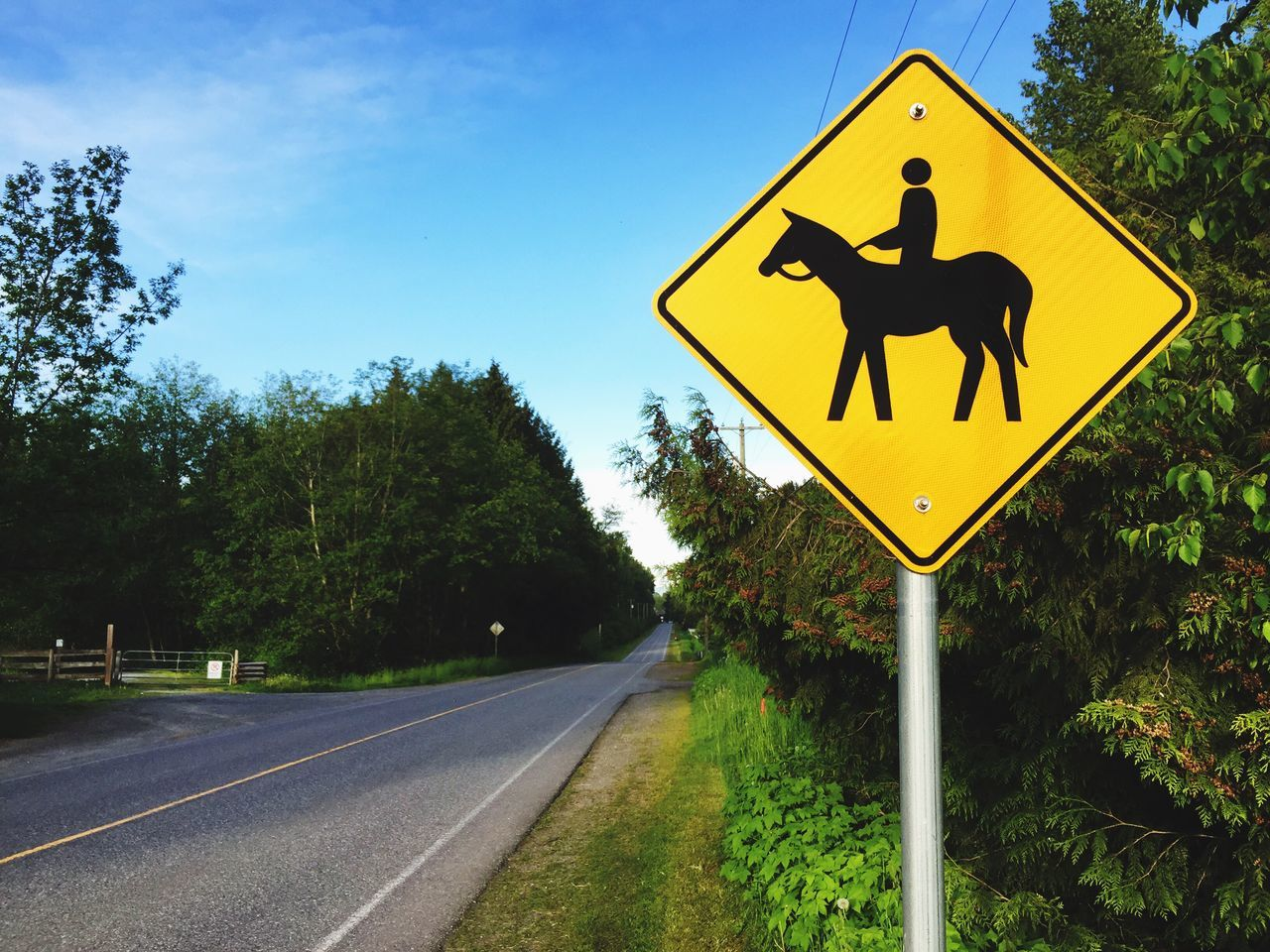 Yellow Road Sign Road Communication Tree Day Transportation Guidance Outdoors No People Sky horse sign