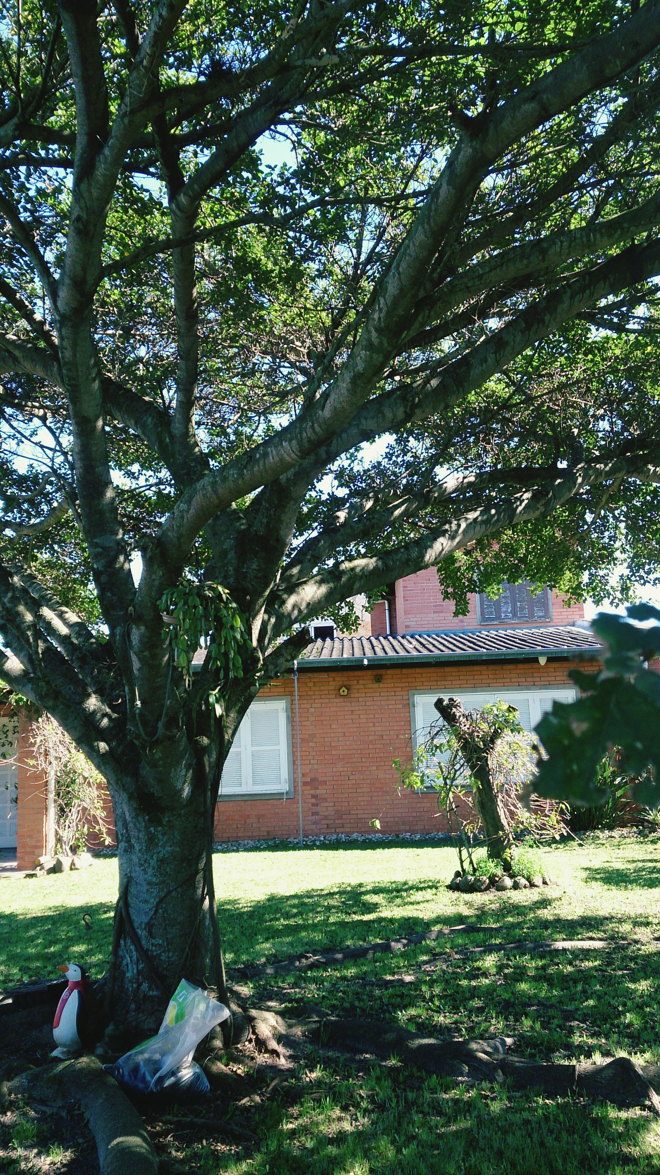 tree, built structure, growth, architecture, building exterior, tree trunk, green color, branch, leaf, park - man made space, nature, plant, day, outdoors, low angle view, sunlight, house, no people, tranquility, formal garden