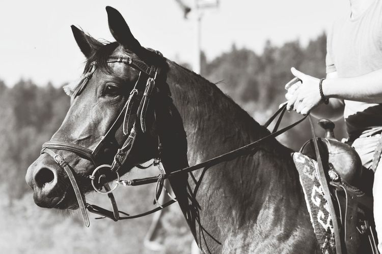 Horse Animal Riding Mane Western Western Horse Cowboy Oldschool Equine Equestrian Horse Photography  Wild West