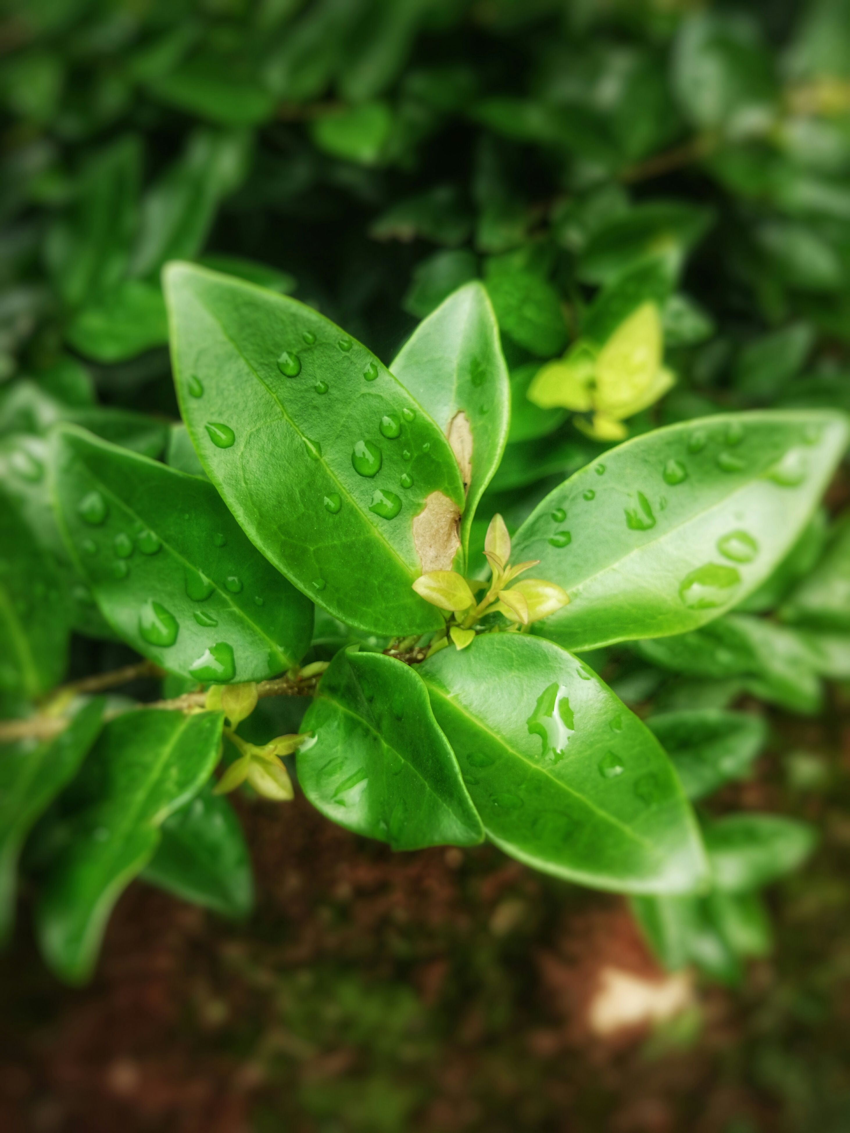 leaf, green color, growth, close-up, plant, drop, freshness, nature, beauty in nature, wet, fragility, focus on foreground, water, selective focus, green, day, no people, dew, outdoors, high angle view