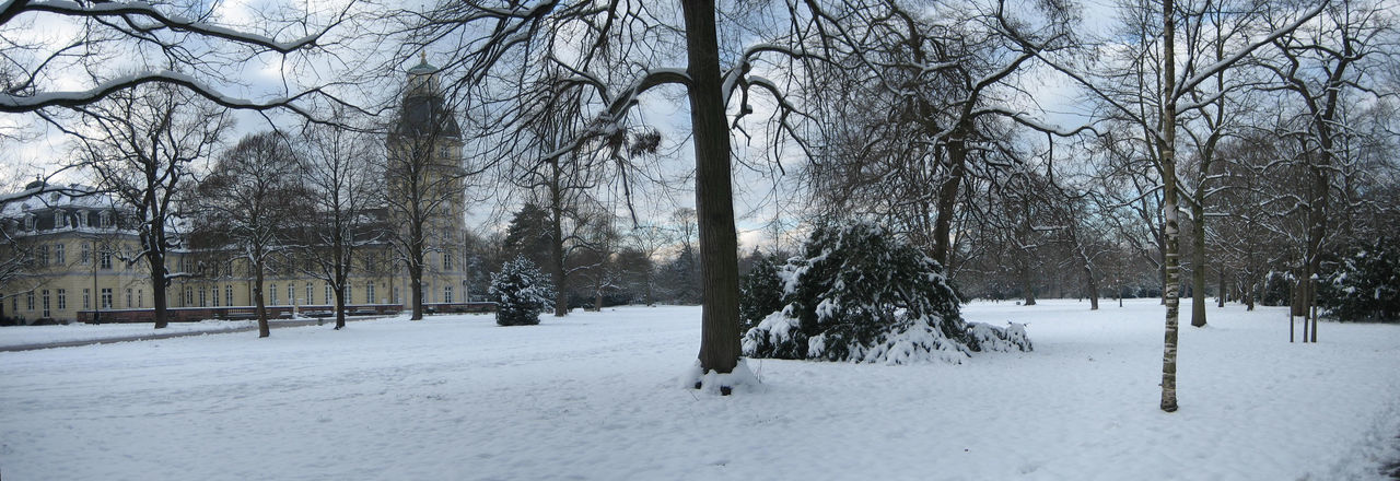 winter, snow, cold temperature, bare tree, tree, nature, weather, tranquility, outdoors, beauty in nature, scenics, tranquil scene, day, no people, landscape, tree trunk, branch, sky