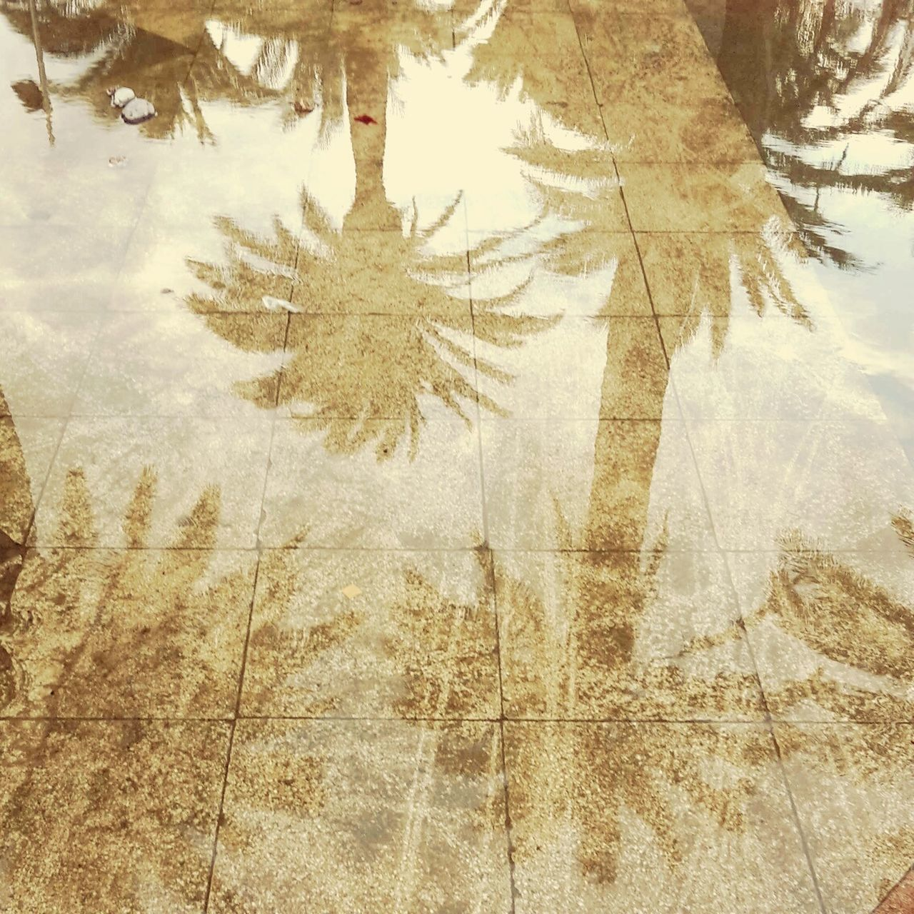 Palm tree Reflections Water Reflections