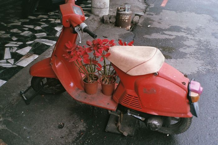 ASIA City City Life City Street Color Film Cute Euphorbia Pulcherrima Film Film Photography No People Nostalgia Old Scooter Old Vehicle Poinsettia Red Red Red Scooter Road Roadside Scooter Scooter Life Scooters Taiwan Transportation Vehicle