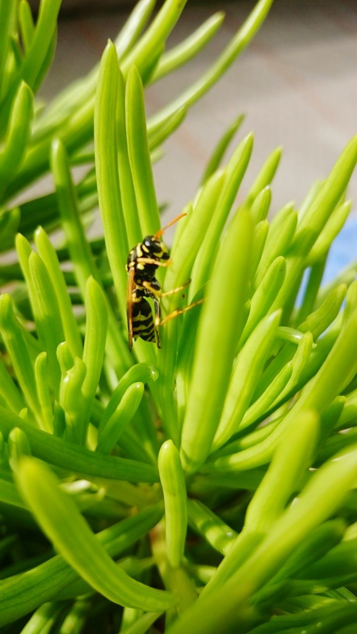 green color, insect, animals in the wild, animal themes, one animal, animal wildlife, growth, no people, leaf, nature, plant, bee, outdoors, day, beauty in nature, close-up, grass, freshness