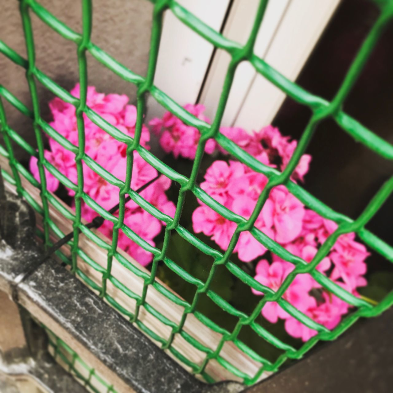 Pink Color High Angle View Metal Metal Grate Green Color Cage No People Day City Plants Green madrid spain