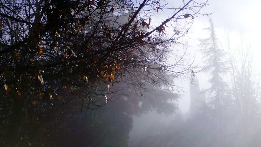 Drops Nebbia Gocce Sole Tree Nature Fog No People Branch Beauty In Nature Forest