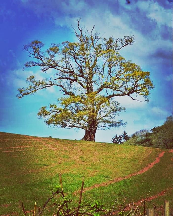 tree Tree Beautiful Tree My Photography. Walking Around. Nature _ Collection .Natural Beauty Simple Things In Life Canon7d  Naturephotography