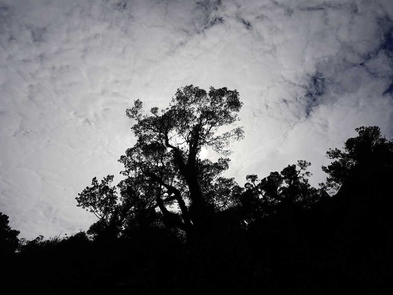 Almost a natural black and white pic :) Nature Tree Silhouette Beauty In Nature Light And Shadow Sky No People Outdoors Low Angle View Day Exploring Sunlight Inspirations Perspective The Purist (no Edit, No Filter) Nature Sky And Clouds Black And White Blue Sky Hope Lifestyles Earth Landscape Heaven Sun