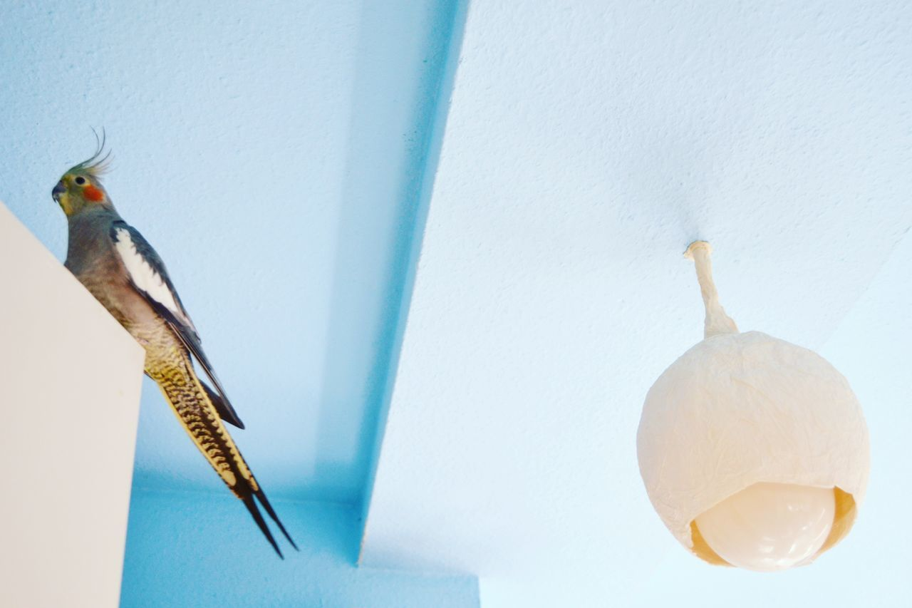Animal One Animal Hanging Animal Themes Bird Indoors  Freshness Parrot Door Ceiling Ceiling Lamp Minimal Minimalistic Minimalism Blue White Urban Wildlife Urban Wild Berlin Concrete Jungle No People RoomPhotography Room Pastel Colors Pastel Blue