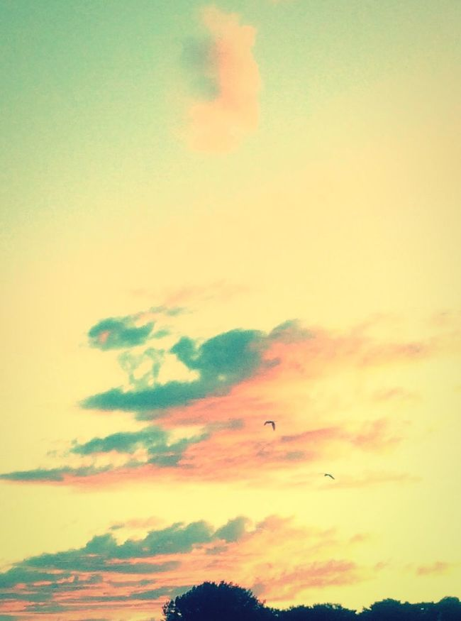 夕陽 Sunset VariousColors Sky Clouds And Sky Nature
