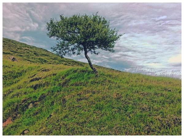 Landscape Trees EyeEm Nature Lover Nature_collection