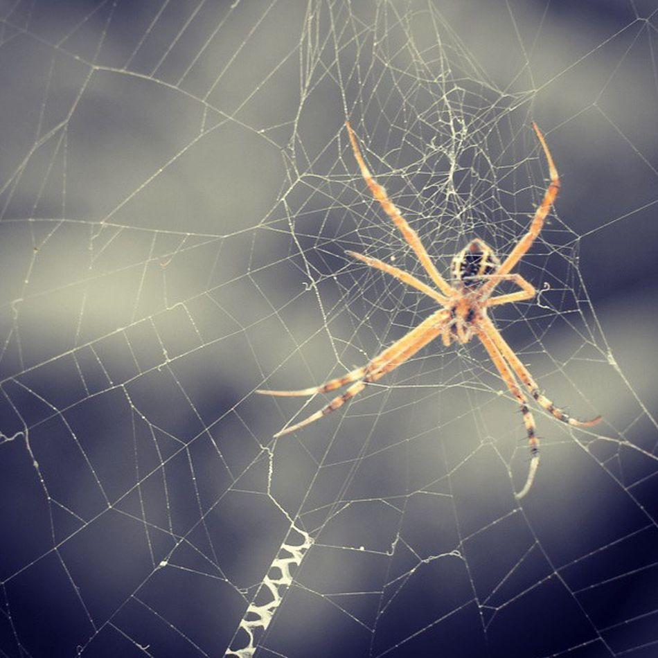 Spider Web Macro Photography Weblife